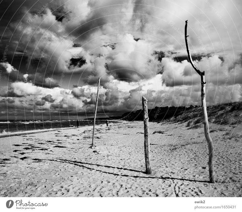 Strandhölzer Mensch Frau Erwachsene Mann 2 Umwelt Natur Landschaft Himmel Wolken Horizont Klima Schönes Wetter Wind Küste Ostsee Weststrand beobachten gehen