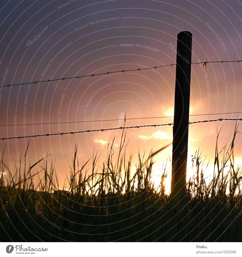 Sun Breakdown Himmel Natur Wiese Gras Stimmung Feld Unwetter Zaun Silhouette Gewitterwolken Holzpfahl Stacheldraht Stacheldrahtzaun