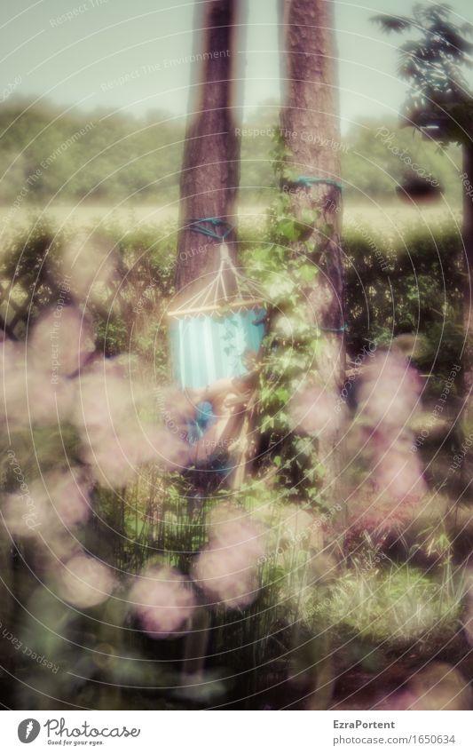 natürlich abhängen Wellness Erholung Freizeit & Hobby Mensch feminin Frau Erwachsene 1 Natur Pflanze Himmel Frühling Sommer Baum Blume Gras Blüte Garten liegen