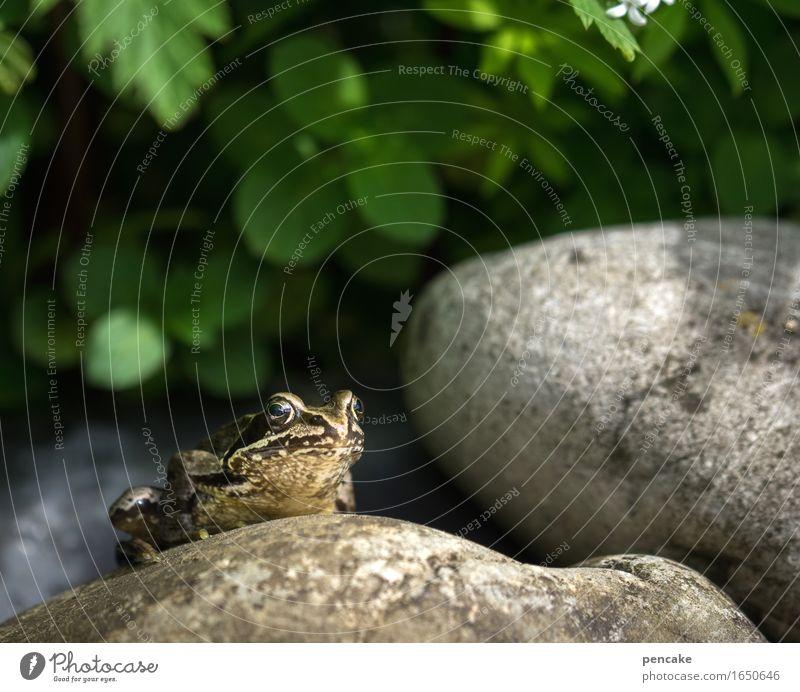 froschauge sei wachsam Frühling Sommer Schönes Wetter Pflanze Garten Teich Tier Wildtier Frosch 1 Stein authentisch Coolness Idylle Pause Perspektive Froschauge