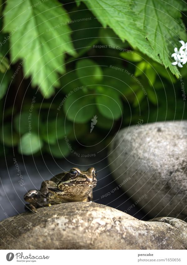 mitquaken Sommer grün weiß Tier Blüte Stein Schönes Wetter Zeichen Coolness Gelassenheit Teich Optimismus Frosch Märchen König Verhext