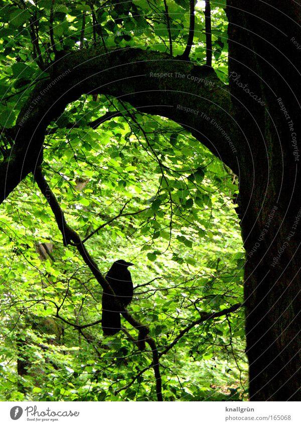 Wait and see... Natur Baum grün Pflanze ruhig schwarz Tier Frühling braun Vogel warten Umwelt sitzen ästhetisch Gelassenheit Blühend