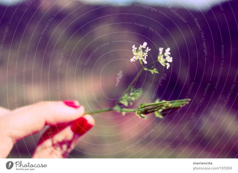 Natur Pflanze Blüte Berge u. Gebirge Schönes Wetter Wildpflanze