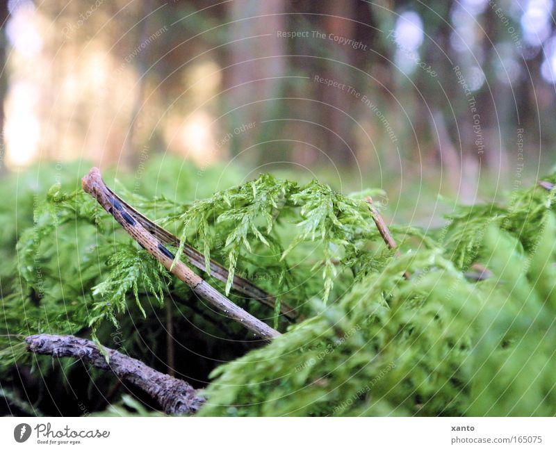 Waldboden Natur Pflanze ruhig Boden Moos Tannennadel