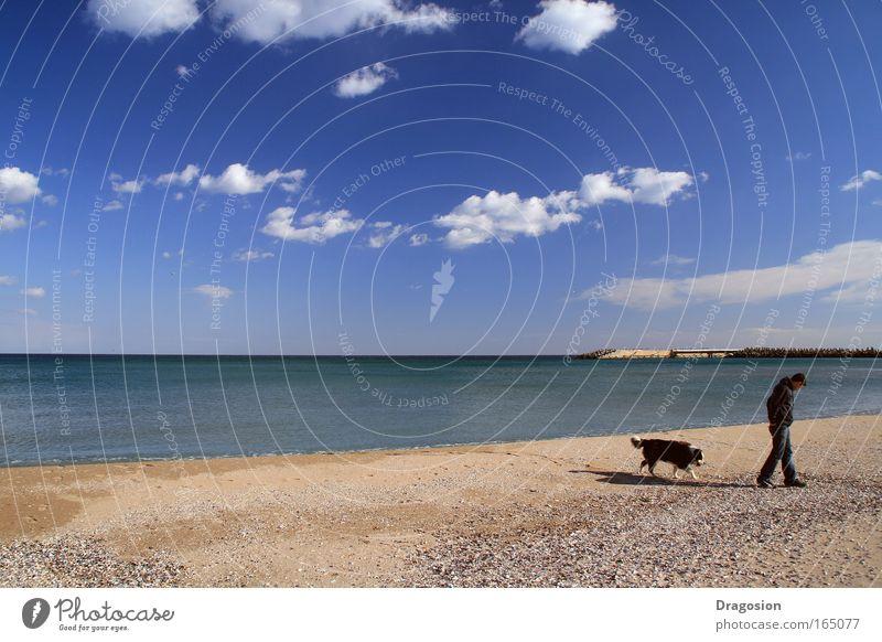 Hund Himmel Wasser Meer Sommer Strand Tier Wolken Landschaft Herbst Gefühle Sand Küste Denken Luft Horizont