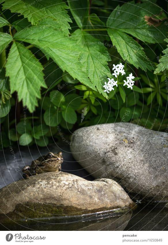 im dreiklang Natur Pflanze Sommer Wasser Tier Blüte Frühling Glück Stein träumen Idylle einzigartig nass niedlich Zeichen Pause