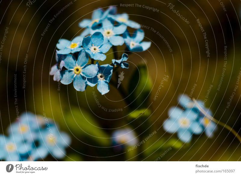 vergiss me not Natur schön grün blau Pflanze ruhig Erholung Wiese Gefühle Blüte Berge u. Gebirge Frühling Park Zufriedenheit Feld