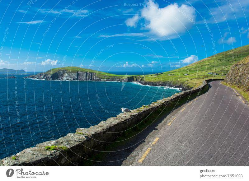 Enge Küstenstraße am Slea Head in Irland Republik Irland Straße fantastisch Atlantik Meer Reisefotografie Dingle eng Felsen Risiko gefährlich Horizont Klippe