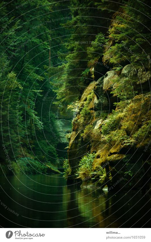 kamnitzklamm Natur Pflanze grün Baum Landschaft Erholung Felsen Fluss Bach bewachsen Elbsandsteingebirge Naturerlebnis Sächsische Schweiz Ausflugsziel