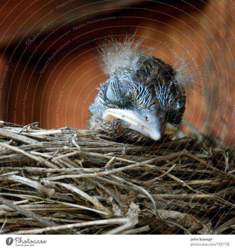 hochgewürgtes, immer gibt es nur hochgewürgtes! Natur schön Tier Holz Kopf Haare & Frisuren Vogel Kindheit Nest Küken Mensch Tierjunges Amsel Nestwärme