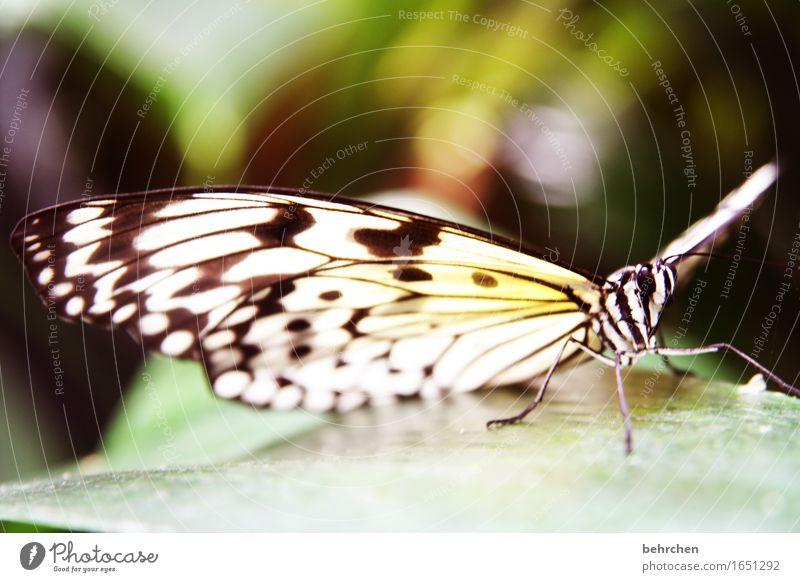 anmut Natur Pflanze schön Baum Erholung Blatt Tier Wiese Beine Garten außergewöhnlich fliegen Park elegant Wildtier Sträucher