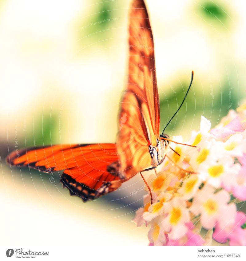 sonnenschein Natur Pflanze schön Blume Erholung Blatt Tier Blüte Wiese Beine Garten außergewöhnlich fliegen orange Park elegant