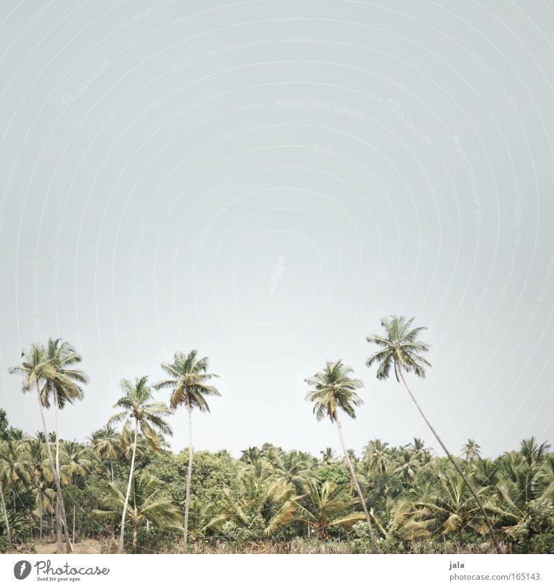 Desert.Forest.Sky Baum Ferne Wald Wärme Landschaft Asien Urwald trocken Indien Palme Schönes Wetter Wolkenloser Himmel Topfpflanze