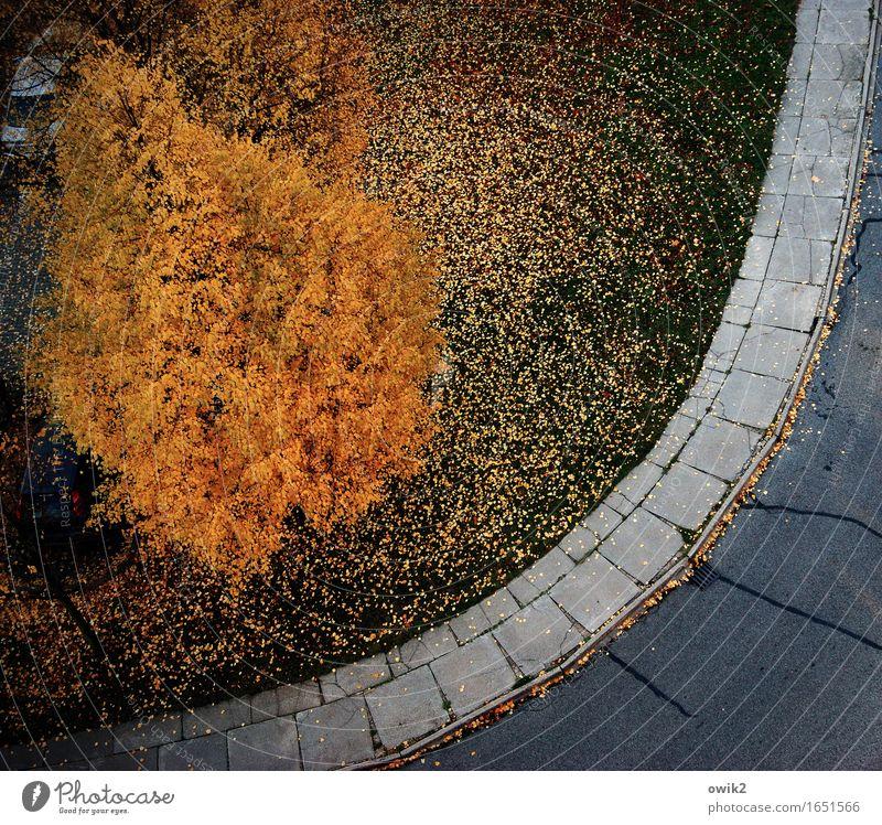 Herbstmoden Umwelt Natur Landschaft Schönes Wetter Baum Gras Herbstlaub Herbstfärbung Straße Bürgersteig mehrfarbig orange Stimmung Trauer Traurigkeit