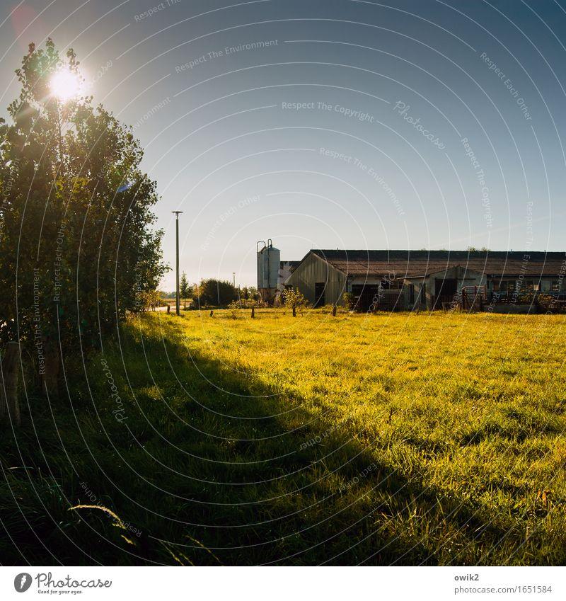 Auf Ummanz Umwelt Natur Landschaft Pflanze Wolkenloser Himmel Horizont Klima Schönes Wetter Baum Gras Sträucher Wiese Rügen Stall Straßenbeleuchtung leuchten