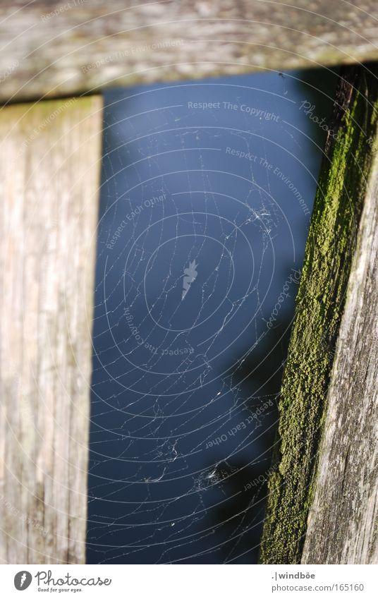 Gesponnen Natur weiß grün schwarz kalt Holz Freiheit braun Brücke berühren fangen Zaun Schweben hängen Spinne Spinnennetz
