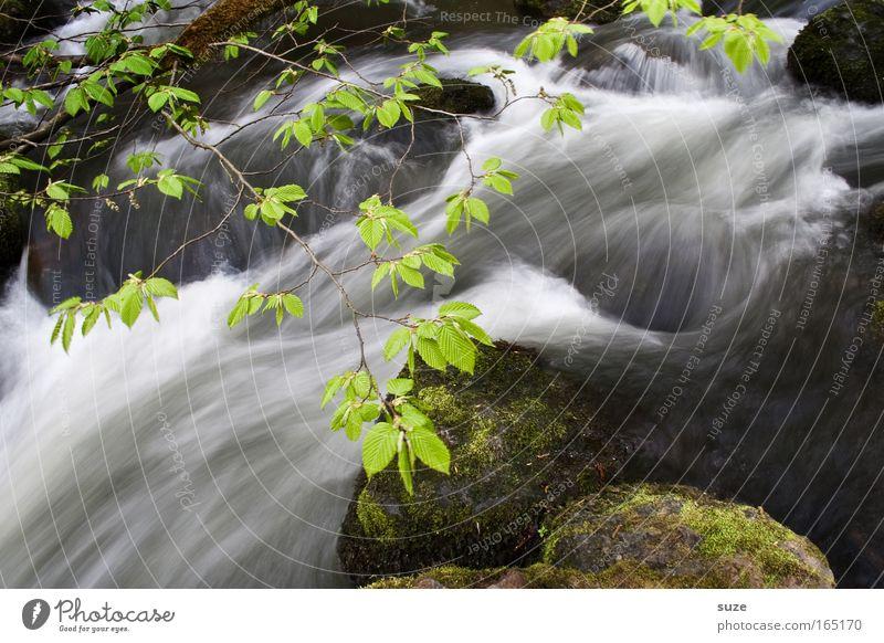 Im Triebtal Natur grün schön Wasser Landschaft Umwelt außergewöhnlich Stein Felsen Wachstum frisch Energie fantastisch Klima Ast nass