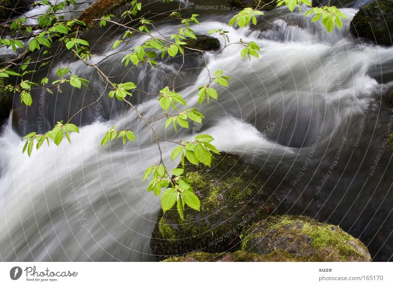 Im Triebtal Umwelt Natur Landschaft Wasser Klima Schönes Wetter Felsen Flussufer Bach Stein außergewöhnlich fantastisch frisch nass schön grün Wachstum