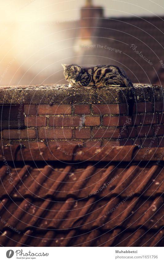 Cat Tier Haustier Katze 1 Stein Backstein elegant fantastisch Wärme braun Gefühle Umwelt cats cute animal animals pet pets Farbfoto Außenaufnahme Menschenleer