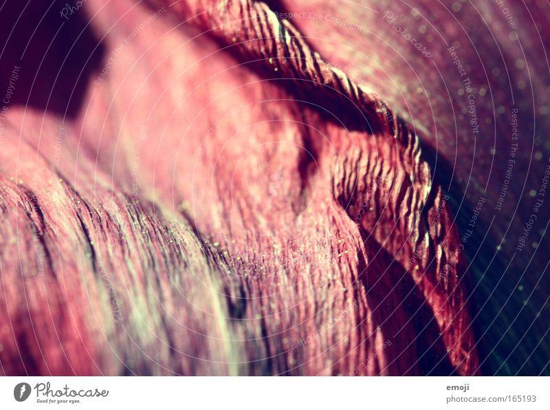 Blumendetail Natur Blume Pflanze rot rosa