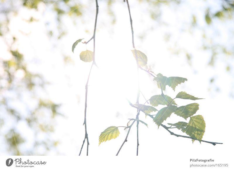 Widerschein Natur schön weiß Baum grün Sommer Ferien & Urlaub & Reisen ruhig Blatt gelb Farbe Erholung Frühling Park Wärme Zufriedenheit