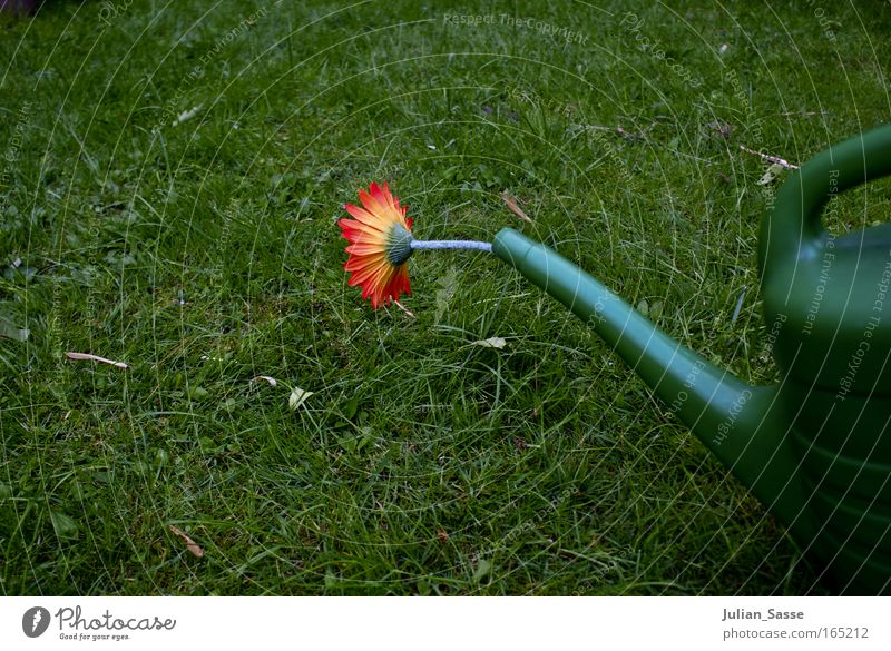Gießkanne Natur Pflanze Wiese Frühling Garten Umwelt Erde Klima Urelemente Klimawandel Gießkanne Kannen