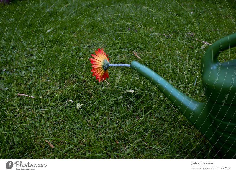 Gießkanne Umwelt Natur Pflanze Urelemente Erde Frühling Klima Klimawandel Garten Wiese Farbfoto Außenaufnahme Experiment Menschenleer Tag Zentralperspektive