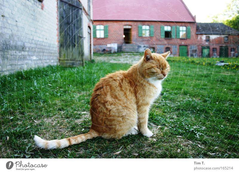 Rote Katze Tier Erholung Zufriedenheit Wildtier Haustier