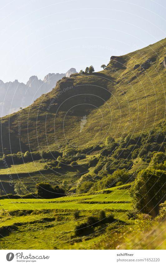 Hanglage Natur Landschaft Pflanze Wolkenloser Himmel Sommer Schönes Wetter Baum Grünpflanze Wiese Feld Wald Hügel Felsen Berge u. Gebirge Gipfel grün Pyrenäen