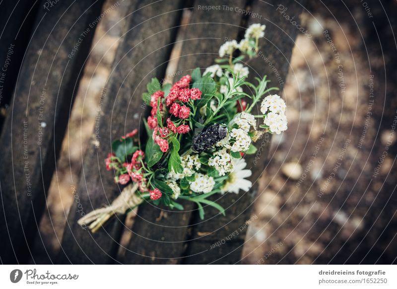 Blümchen. Blüten. Frühling. Liebe. Natur Pflanze schön Blume Gefühle Gesundheit Glück Zusammensein Dekoration & Verzierung Idylle ästhetisch einzigartig
