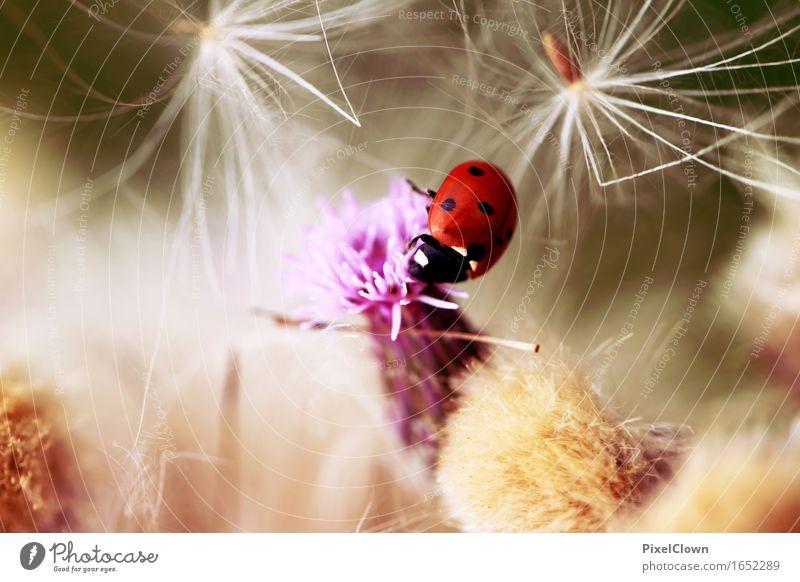 Marienkäfer Natur Ferien & Urlaub & Reisen Pflanze Blume Tier Freude Blüte Gefühle Wiese Gras Glück Garten Stimmung Tourismus Park Zufriedenheit