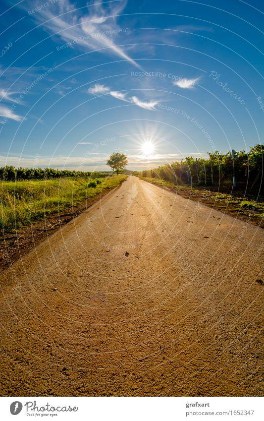 Sonne am Ende einer einsamen Strße mit Baum Straße Erscheinung Karriere Beginn mission Zukunft Ziel Fortschritt Himmel Inspiration Kroatien Licht Motivation