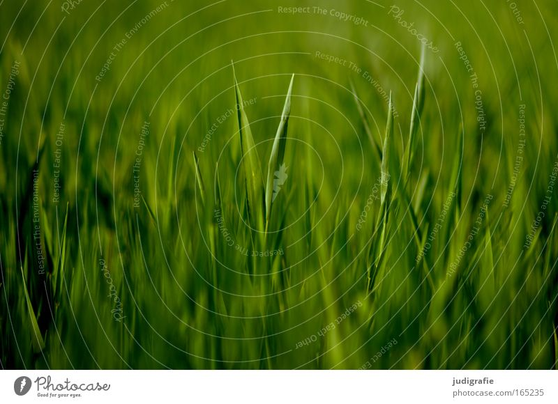 Acker Natur grün Pflanze Sommer Leben Frühling Landschaft Kraft Feld Lebensmittel Umwelt ästhetisch Wachstum anstrengen Umweltschutz Umweltverschmutzung