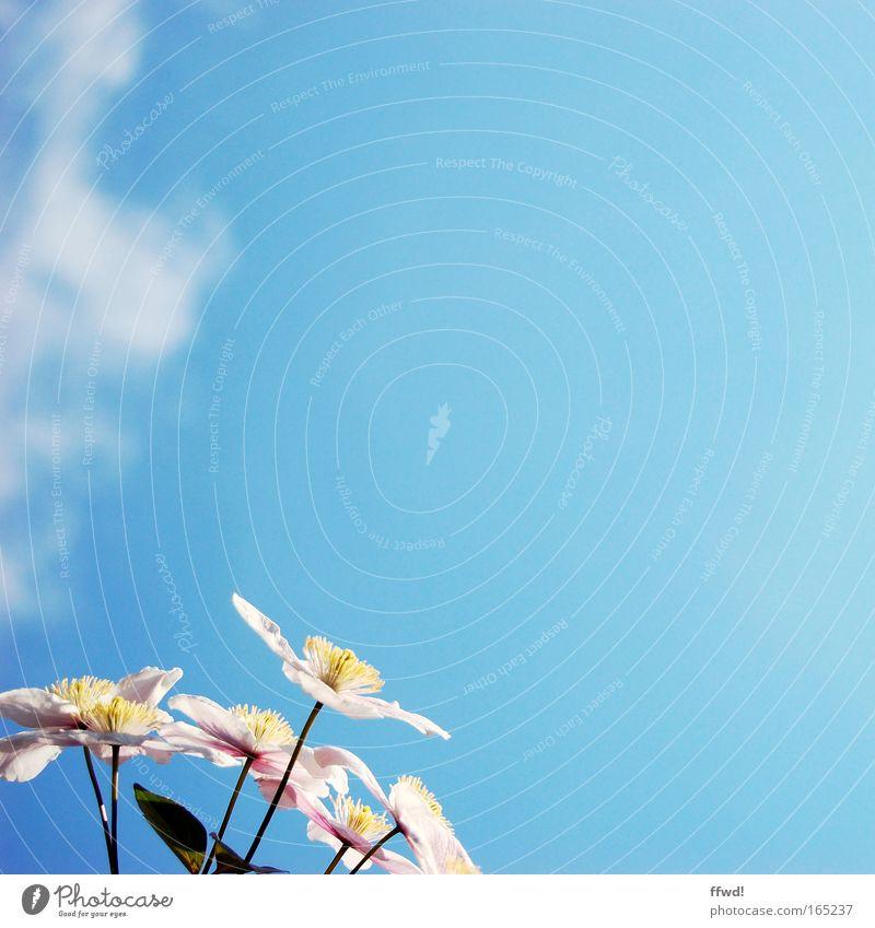 Mehr Platz für Blumen Himmel Natur blau Pflanze Sommer Wolken Umwelt Leben Frühling Glück Blüte rosa natürlich frisch Fröhlichkeit Wachstum