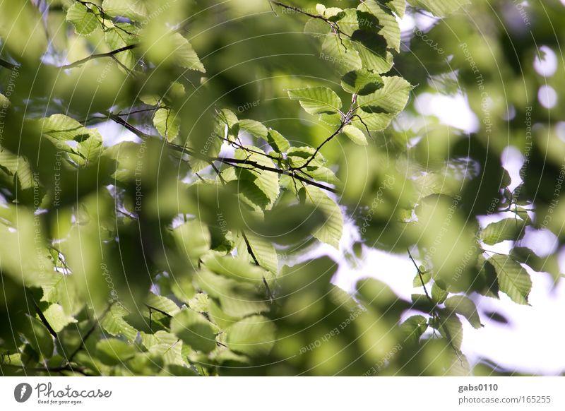 Buchen sollst du suchen Farbfoto Außenaufnahme Nahaufnahme Menschenleer Tag Schatten Kontrast Starke Tiefenschärfe Gartenarbeit Umwelt Natur Landschaft Pflanze