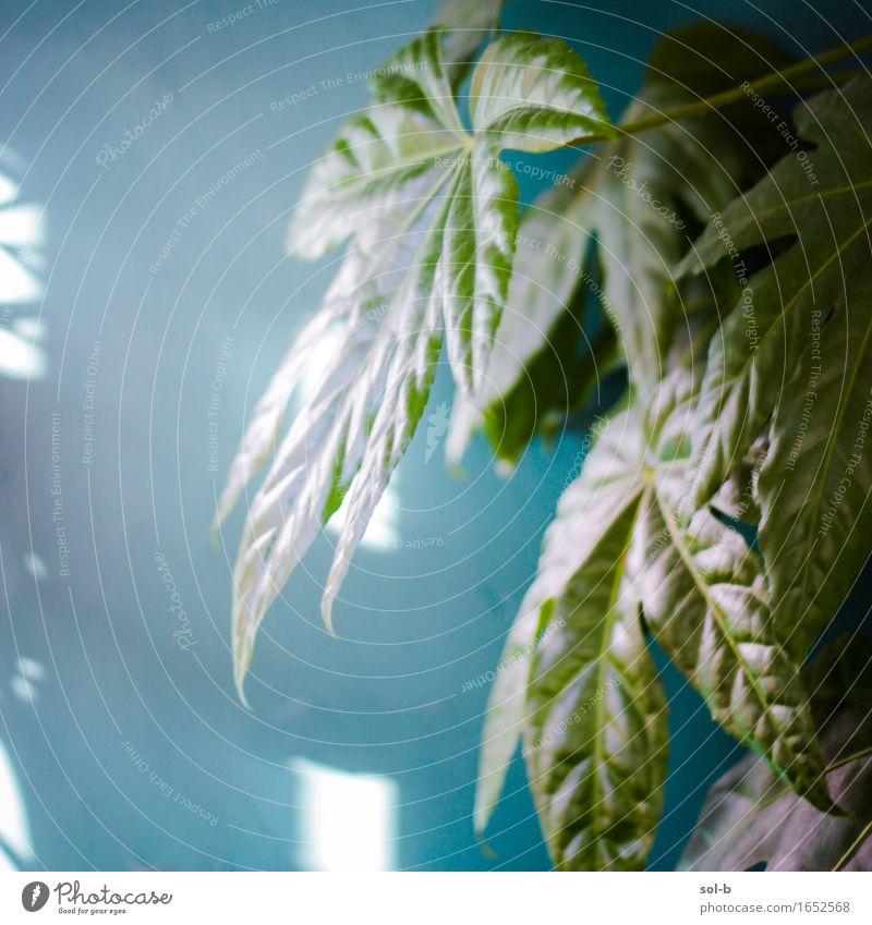 grnndsgrn Häusliches Leben Natur Pflanze Topfpflanze Gesundheit grün türkis Zimmerpflanze Wand Blatt gewachsen Farbfoto Innenaufnahme Menschenleer Tag Licht