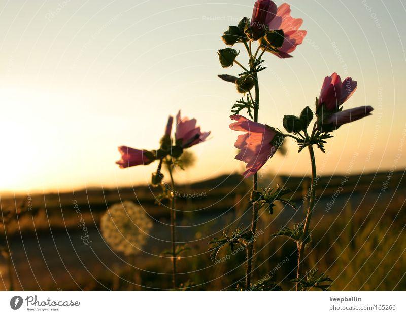 drei Natur Blume Pflanze Sommer Wiese Blüte Romantik Schönes Wetter Grünpflanze Frühlingsgefühle
