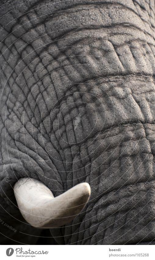 zAhnfee Schwarzweißfoto Außenaufnahme Nahaufnahme Detailaufnahme abstrakt Tag Schwache Tiefenschärfe Tierporträt Wildtier Tiergesicht Zoo 1 Aggression