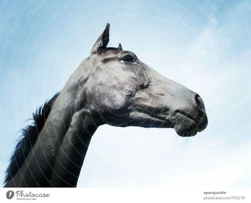 Rosanna Farbfoto Außenaufnahme Menschenleer Tag Tierporträt Wegsehen Zufriedenheit Freizeit & Hobby Freiheit Himmel Schönes Wetter Dorf Pferd Tiergesicht 1
