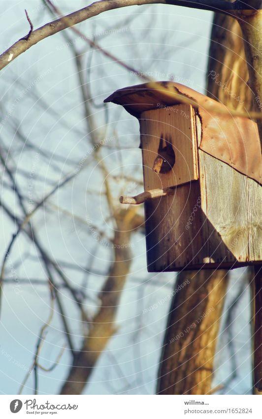 Ein junges Eichhörnchen schaut aus einem Starenkasten heraus Wildtier Nagetiere Starkasten Nistkasten beobachten Nestbau Hausbesetzung kahl Aussicht