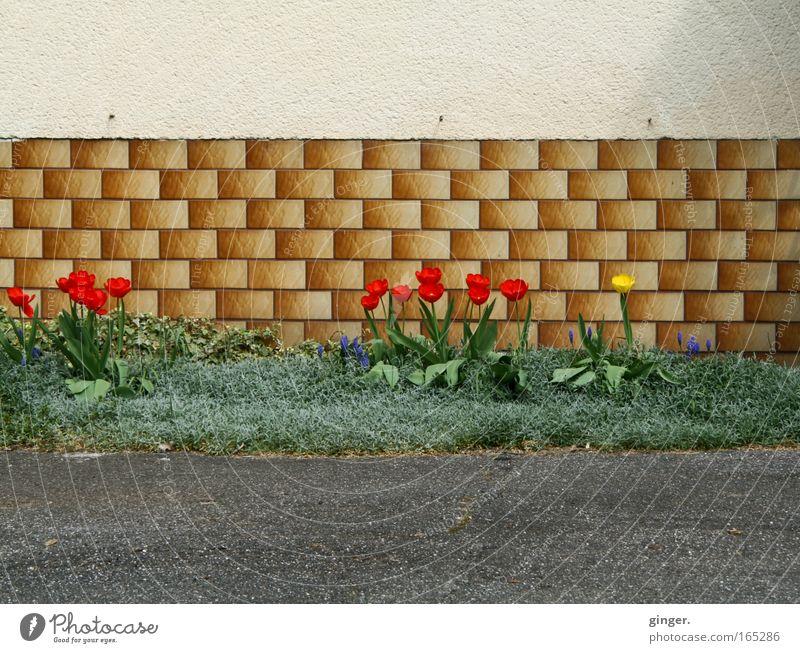 Vorstadtidylle grün Pflanze rot Blume Haus gelb Wand Frühling grau Mauer Gebäude Blüte Garten braun Fassade Wachstum