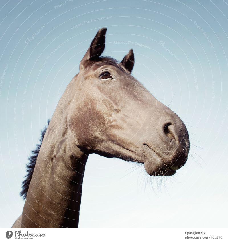 Lucky horse ruhig Tier elegant Pferd Tiergesicht Dorf Gelassenheit Neugier entdecken Freundlichkeit Reiten Frühlingsgefühle Tierliebe