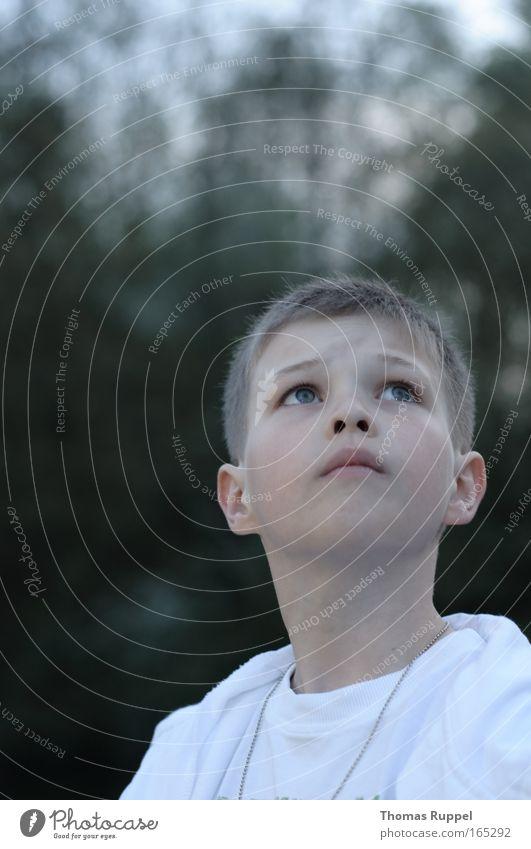 Blick nach oben Mensch Kind Natur Jugendliche weiß ruhig Junge träumen Denken maskulin beobachten Neugier Konzentration Wachsamkeit Interesse