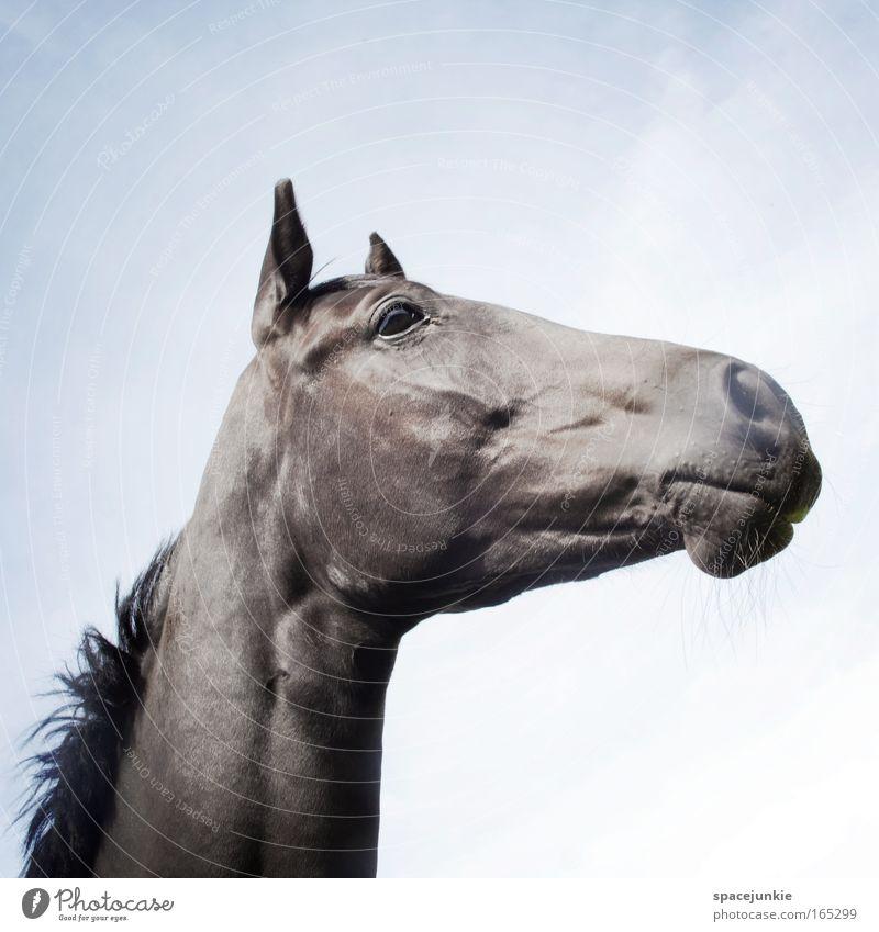 Rosanna (2) Tier Kraft elegant Pferd ästhetisch Idylle Gelassenheit Neugier genießen Wachsamkeit Fressen Stolz Hochmut Reiten achtsam eitel