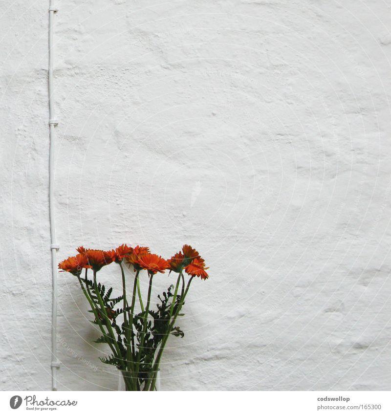 whitewall attire weiß Pflanze Blume ruhig Tod Wand Stil Traurigkeit Mauer Raum Wohnung Innenarchitektur natürlich Design modern Energiewirtschaft