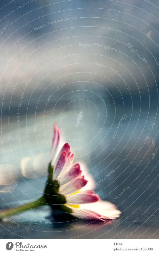 . Wasser schön Himmel Blume Erholung Blüte Frühling rosa frisch Kitsch Dekoration & Verzierung zart außergewöhnlich feucht leicht