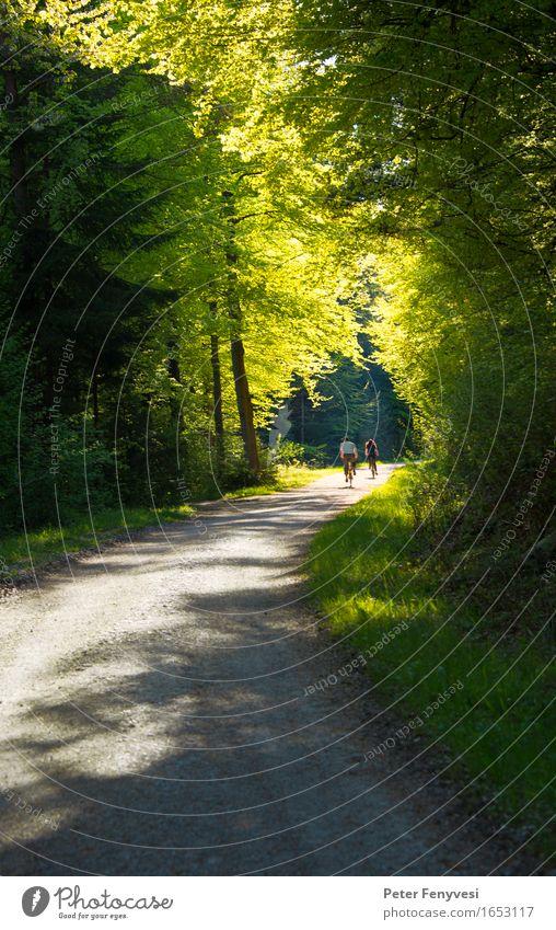 Lichttunel Erholung Fahrradfahren Fahrradtour Paar 2 Mensch Umwelt Natur Landschaft Wald schön gelb grün Stimmung träumen ruhig Farbfoto Außenaufnahme