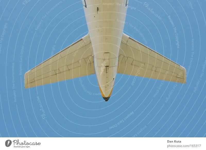 Das Ende des Waljahrs. weiß blau Sommer Freude Ferien & Urlaub & Reisen Ferne Tier Erholung Freiheit Glück träumen Wärme Flugzeug fliegen Fisch Luftverkehr