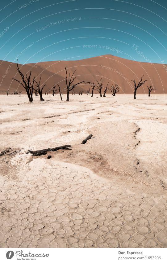 Deadvlei Ferien & Urlaub & Reisen Tourismus Abenteuer Expedition Landschaft Sand Wolkenloser Himmel Wärme Dürre Wüste heiß trist trocken Durst Einsamkeit
