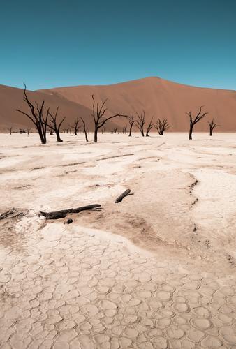 Deadvlei Natur Ferien & Urlaub & Reisen Landschaft Einsamkeit Wärme Zeit gehen Sand Tourismus trist Vergänglichkeit Abenteuer trocken Wüste heiß